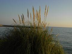 r0012690 (Xarmux) Tags: sea mer ciel cote roseaux languedoc jete ste roseau mditerrane heraut