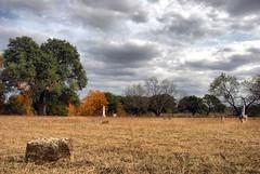 Grassdale Cemetery in Autumn (David Kozlowski) Tags: autumn trees beautiful cemetery graveyard grass clouds all texas photographer unique rights reserved awardwinning distinctive ©david kozlowski palopintocounty dallasphotoworks davidkozlowski dallasphotoworkscom dallasphotographer fortworthphotographer grassdalecemetery