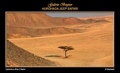HURGHADA JEEP SAFARI (Albert ☺ bognerart.eu) Tags: sahara geotagged photo foto sonnenuntergang desert albert dune egypt camel desierto egipto duna ägypten egitto bah hurghada düne kamel wüste deserto bedouin désert Ägypten beduini cammello hamada beduino égypte tele1 mısır jeepsafari bogner beduíno iso80 sanddüne çöl hammada beduinen pustinja camélido bédouins egipat camélidé sandwüste albertbogner bognerart excellentphotographerawards ev14 artmemberssalzburg colors100000 bognerartcommentedpictures bognerartprizesmedalsandawards bognerartothersfavorites steinwüste alghardaqah felswüste fotoexcelente albahralahmar gouvernementrotesmeer muhafazatalbahralahmar alghurdaqah algurdaqa ilgardaga ilgurdaga geo2734 redseagovernorate Αίγυπτος rgb19013080 mannaitours geo270337 geo27043366 geo27038413365542 desertodosaara Βεδουίνοι