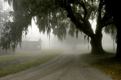 Crossroads (Sco C. Hansen) Tags: road sc grass fog barn scott moss oak day south country dirt spanish carolina hansen beaufort senic lowcountry beaufortcounty beaufortsc scotthansen abigfave colorphotoaward aplusphoto regionwide