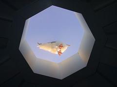 SeagulOnTop (Fun2Do) Tags: light bird feet nature glass air bottom ameland shape seagul
