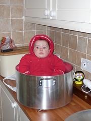 Herbert in pot