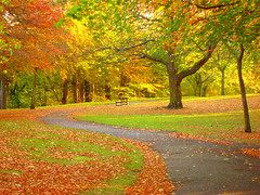The long and winding road (Northern_Night_Sky) Tags: road park autumn orange green fall bench scotland path aberdeen seatonpark blueribbonwinner golddragon platinumphoto colorphotoaward superbmasterpiece diamondclassphotographer ~vivid~ colourartaward happinessconservancy