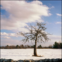 Rilke series (#4) (DF9999) Tags: trees winter snow 120 6x6 film zeiss rural mediumformat square stillleben vermont fuji newengland hasselblad simple jungian archetype rilke 80mm 500cm viproom rainermariarilke blueribbonwinner artisticexpression littlestories supershot imagepoetry fujipro160s mywinners abigfave platinumphoto treesubject diamondclassphotographer flickrdiamond megashot 80mmplanart citrit envyofflickr theunforgettablepictures naturewatcher overtheexcellence betterthangood picswithsoul planar80mmf28cfe