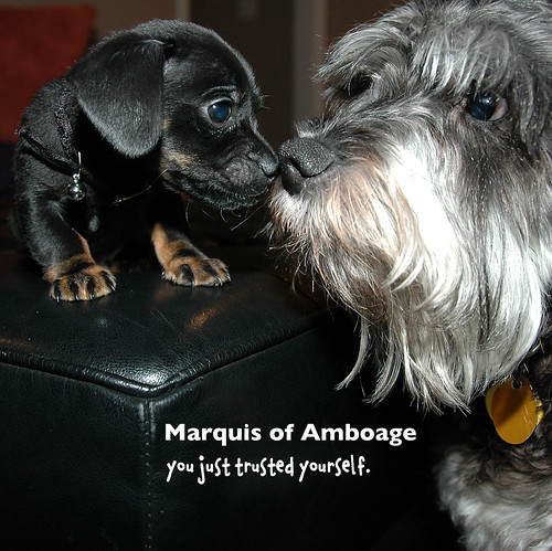 Marquis of Amboage: you just trusted yourself