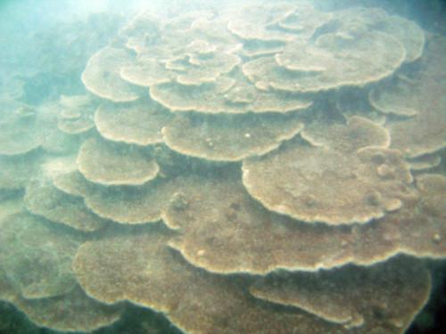 Serpent coral