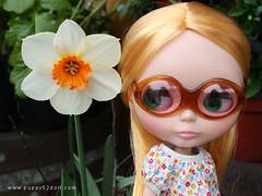 Daffodil (puppy52) Tags: mall tsawwassen blythe ateliermatin lemonbuttercup