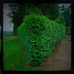 nymans view (plattlandtmann) Tags: uk view hedge tnxtobreannaforthettv