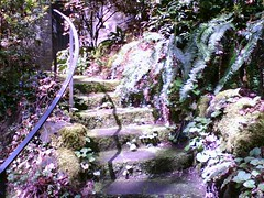 Leach Botanical Gardens - mossy steps (shandra_lynn) Tags: steps mossy leachbotanicalgardens
