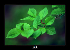 Green spirit (~mohsentaleb) Tags: