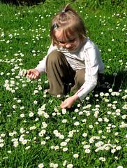 Je t'aime ..., beaucoup, passionnment,  la folie, ... ! (Martine LB) Tags: flowers fleurs canon child candid enfant canonpowershot candide lna pquerettes lawndaisy goldstaraward