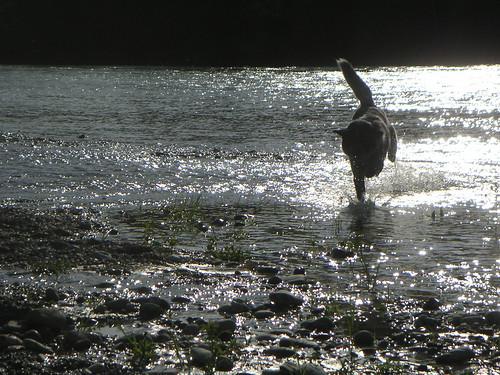 Mika genießt die Sprints im flachen Wasser