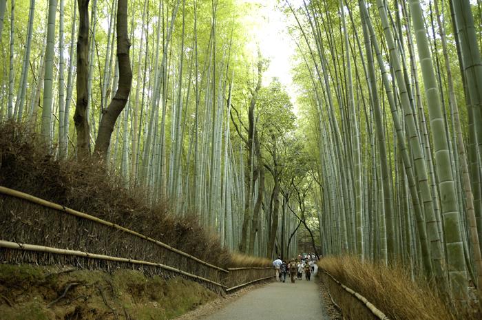 嵐山竹林步道