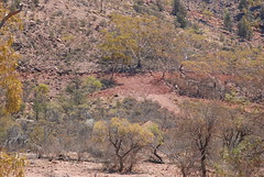 'minimal impact'? exploration scarring on the flanks of mount gee - link to my Arkaroola Sanctuary - would U mine it? set on flickr