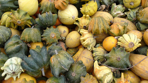 Star gourds
