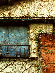 Reclaimed by nature (tanakawho) Tags: city autumn roof urban house building abandoned window tokyo decay vine blueribbonwinner reclaimedbynature mywinners utilitywire tanakawho diamondclassphotographer afterclass2014