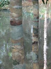 Trees, water and reflexions (krismo_pompas) Tags: old temple cambodia surrealism magritte angkor reflexion kbalspean cambodia2007 truncs