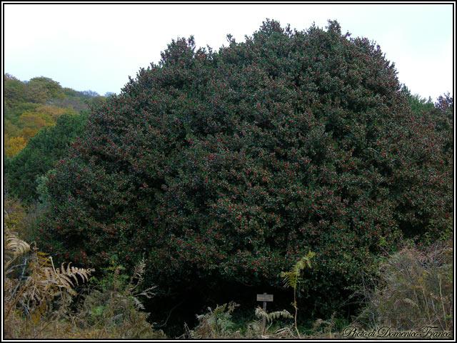 Fotografiamo gli alberi monumentali