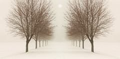 A perfect world (James Jordan) Tags: trees winter panorama mist snow reflection fog wow mirror 100v10f symmetry onwhite flickrsbest 25faves topofthefog colorphotoaward impressedbeauty aplusphoto treesubject ysplix betterthangood thesecretlifeoftrees
