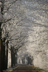the road (atsjebosma) Tags: road christmas trees winter shadow fab white nature frozen bomen bevroren perspective nederland thenetherlands natuur explore friesland weg straat naturesfinest perspectief supershot 35faves 25faves abigfave anawesomeshot impressedbeauty