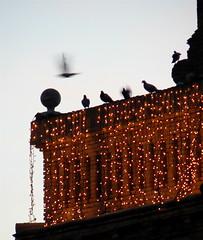 las palomas de navidad (wheresthedogslead) Tags: christmas church valencia birds lights navidad spain flight nadal olocau