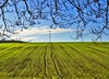 Winter field (algo) Tags: blue england sky cloud tree green field photography topf50 topv333 bravo chilterns rows algo seedlings twigs magicdonkey 50f abigfave impressedbeauty aplusphoto ultimateshot 200750plusfaves superbmasterpiece