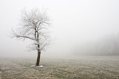 frozen tree (gilles) Tags: winter france fog season hiver jura arbre brouillard gel saison