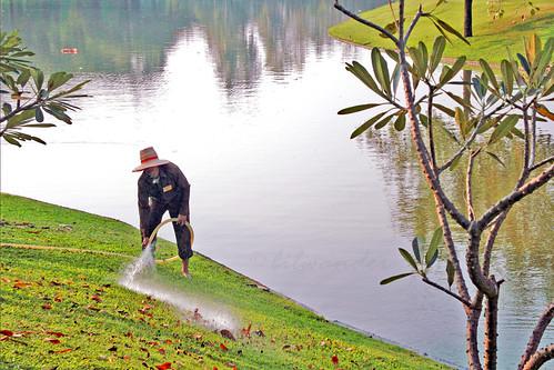 Thailand, Ayutthaya Summer Palace, gardener at work