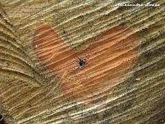 Coração por Alessandro Sousa