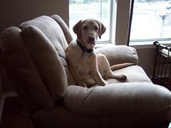 chester'schair