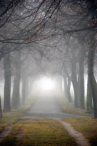 [フリー画像] 自然・風景, 霧・霞, 樹木, ドイツ, 道, 200807080900