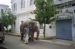 cute elephant (Jennifer Kumar) Tags: elephant negativescan tamilnadu pondicherry yannai india1998 puducherry decoratedelephant tamilom tamilaumindia1998