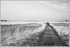 Riding Nowhere (AWD Alessandro Vecchi) Tags: road park bw parco netherlands bicycle strada nederland moor bicicletta gelderland hogeveluwe brughiera alessandrovecchi
