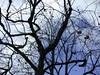 日本京都行屋與樹之美DSCN5583