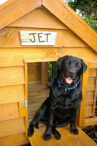 Jet and his home