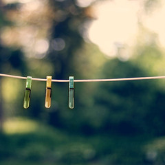 (caterpillars) Tags: green yard outdoors 50mm wire backyard bokeh laundry chapeau canondigitalrebel clothesline clothespin canon50mmf14 canon400d canonxti vision100