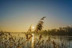 Winter sunrise at the lake (martintimmann) Tags: seagrass romance landscape water loxia2821 sky lake e sunrise