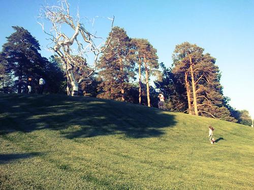 Nelson-Atkins Sculpture Park