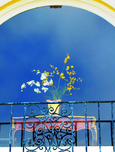 Speck in Time 拍攝的 San Francisco - Flowers in a living room of a house on Marina Boulevard。
