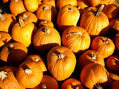 Pumpkins Desktop Wallpaper