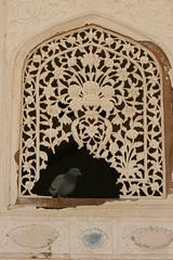 lacelike (Buzia) Tags: india window amber lace palace jaipur rajasthan