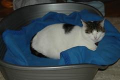 DSC_7459.JPG (judey) Tags: cat twinkle