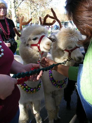 Tijuana Reindeer