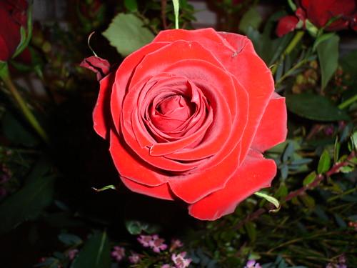 vday_flowers_closeup.jpg