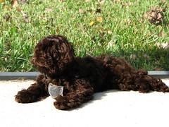 Fondue, Annie's dog cousin