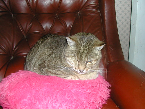 Geordie on pink cushion