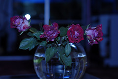 ياورد من يشتريك ..؟ (aZ-Saudi) Tags: red roses white rose yellow arabic saudi arabia ksa ورد اصفر احمر ابيض arabin ِarabs