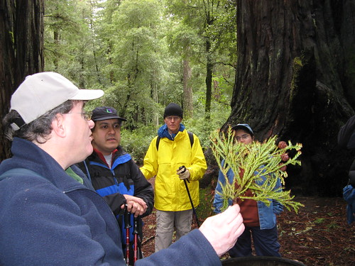 Dave the Docent on redwood reproduction