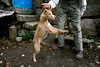 08045D1143 (Paulgi) Tags: dog man portugal europe legs 24mm minho lindoso paulgi