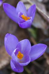 Fiori (amarani_fotografia) Tags: flowers flower macro nature natura fiori fiore paesaggi paesaggio naturalmente naturalistica